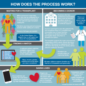 How Organ Donation Works